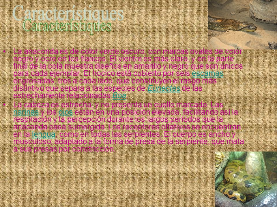 Característiques