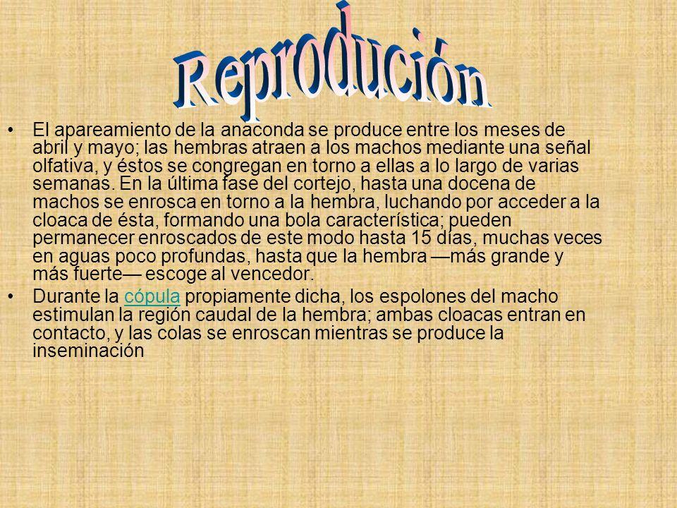 Reprodución