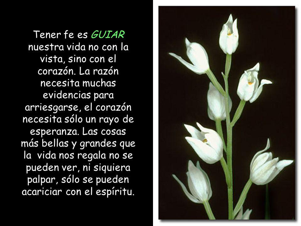 Tener fe es GUIAR nuestra vida no con la vista, sino con el corazón
