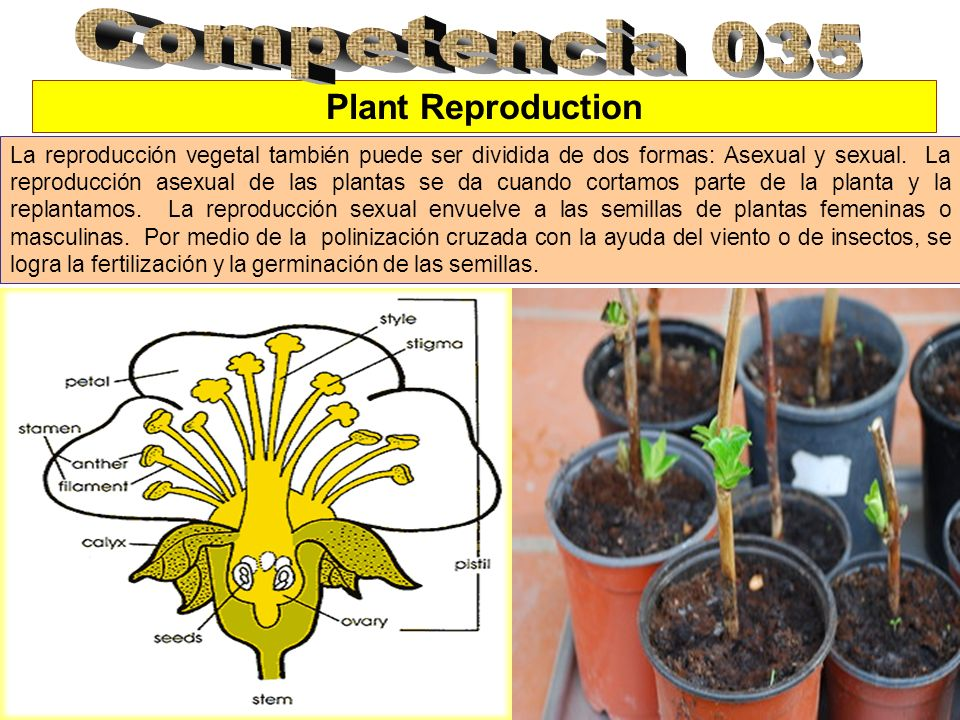 Competencia 035 Plant Reproduction