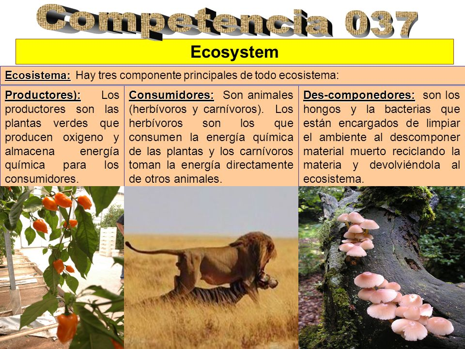 Competencia 037 Ecosystem