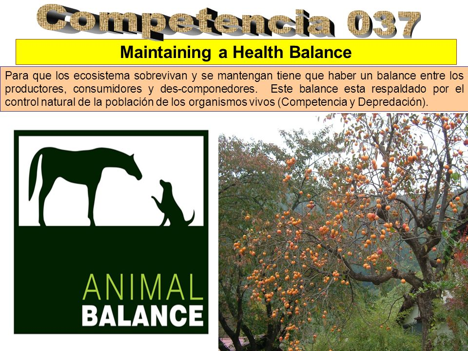 Maintaining a Health Balance