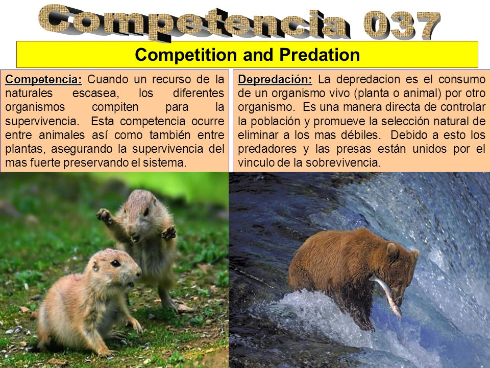 Competition and Predation