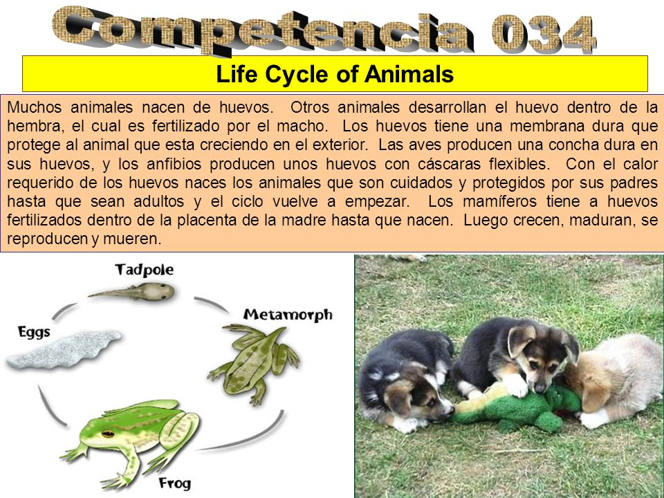 Competencia 034 Life Cycle of Animals