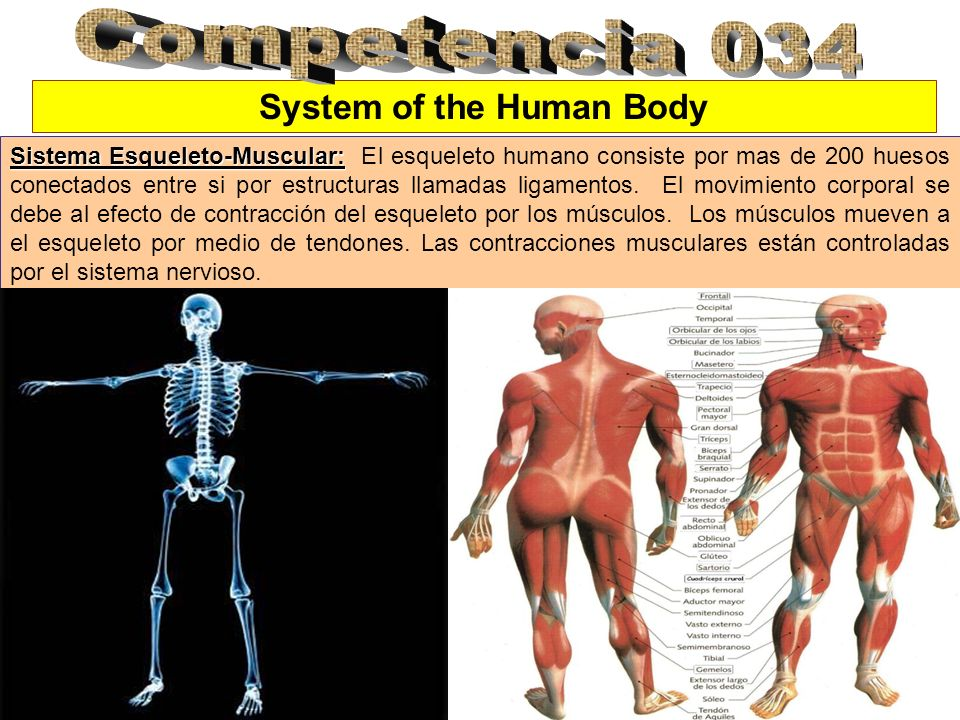 System of the Human Body