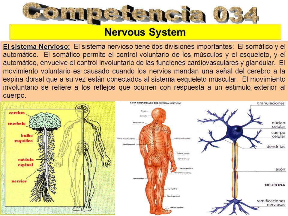 Competencia 034 Nervous System