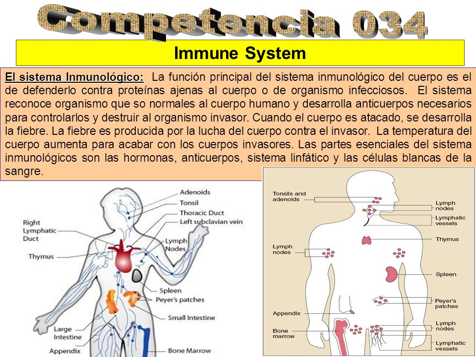 Competencia 034 Immune System
