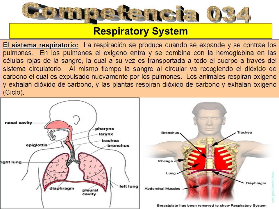 Competencia 034 Respiratory System