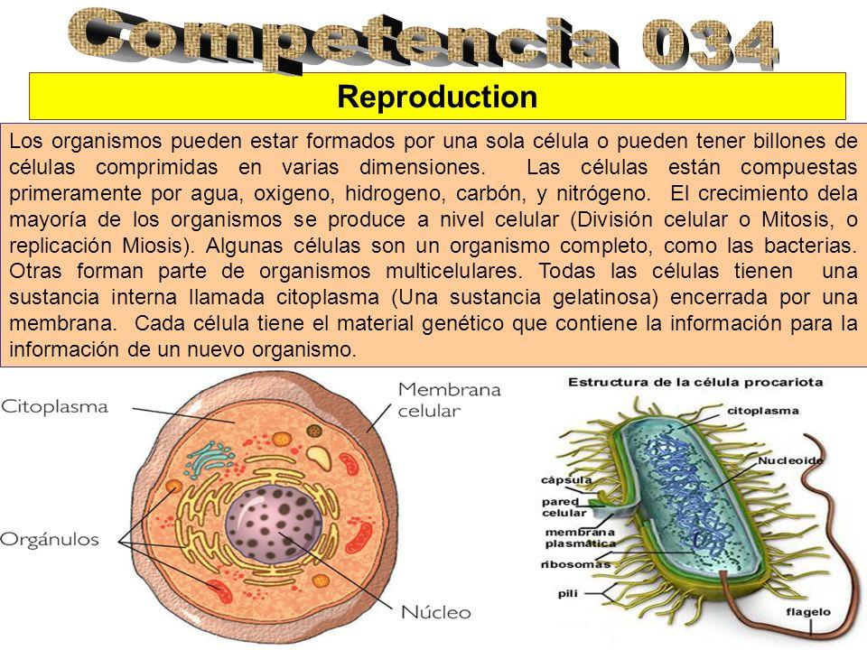 Competencia 034 Reproduction