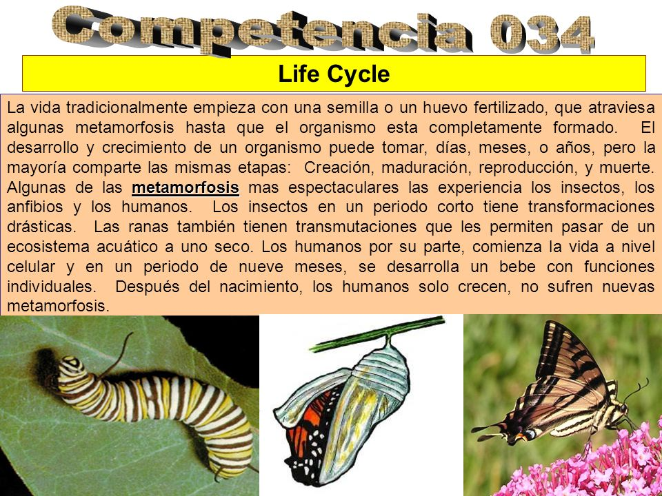 Competencia 034 Life Cycle