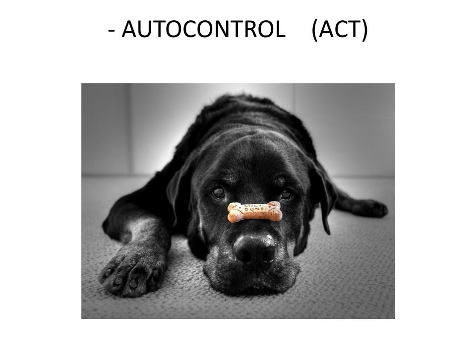- AUTOCONTROL (ACT)