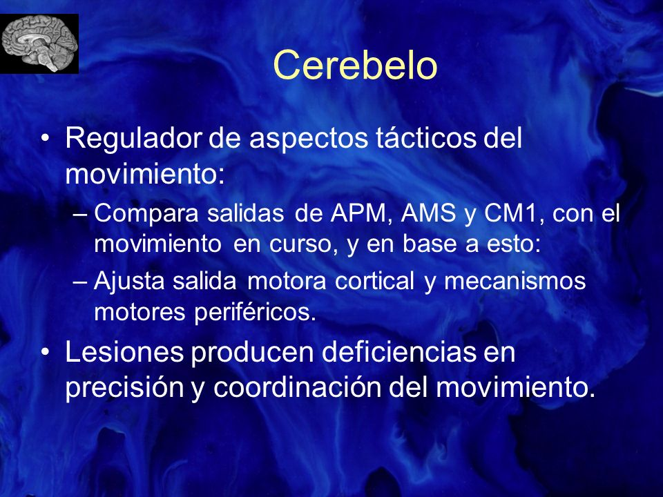 Cerebelo Regulador de aspectos tácticos del movimiento: