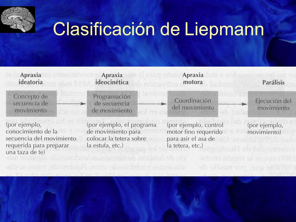 Clasificación de Liepmann