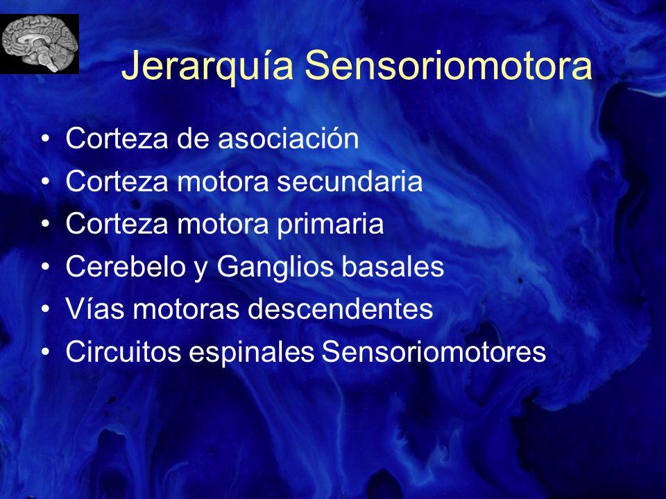 Jerarquía Sensoriomotora