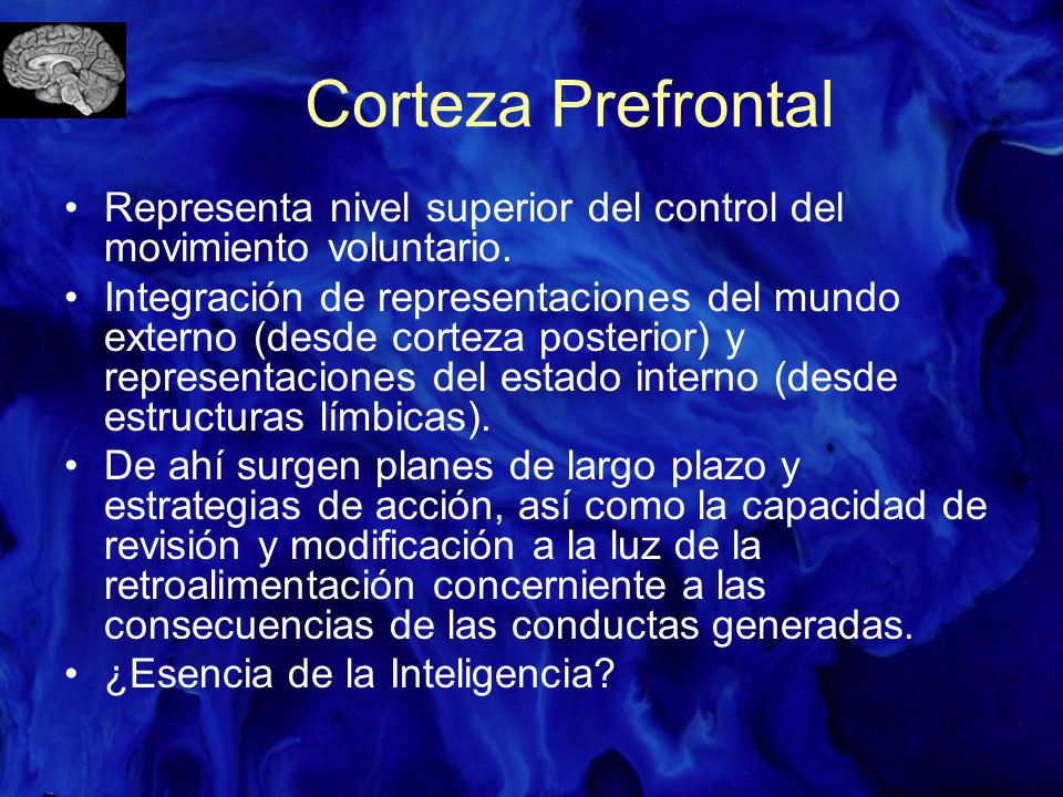 Corteza Prefrontal Representa nivel superior del control del movimiento voluntario.