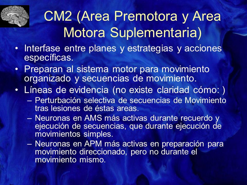 CM2 (Area Premotora y Area Motora Suplementaria)