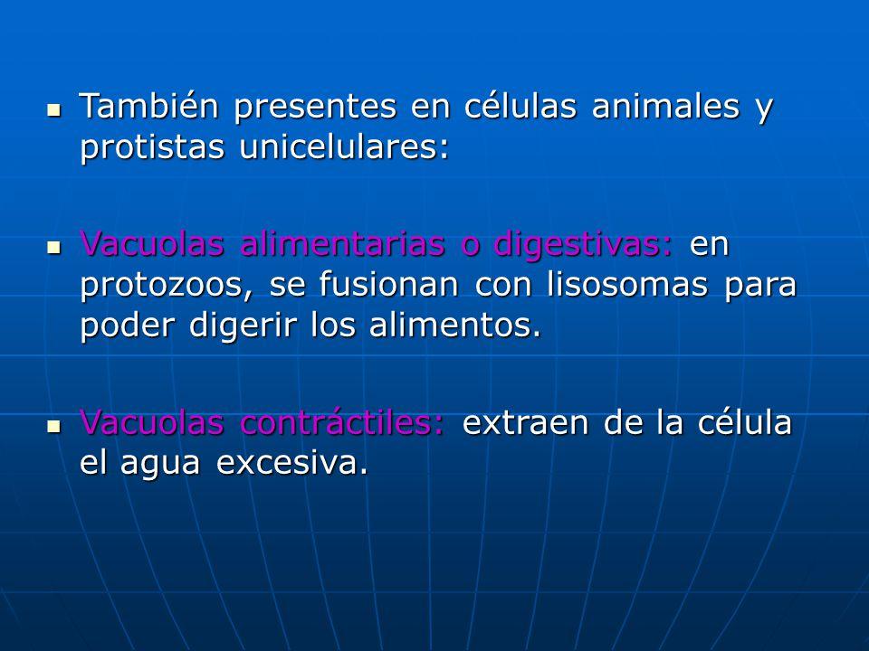 También presentes en células animales y protistas unicelulares: