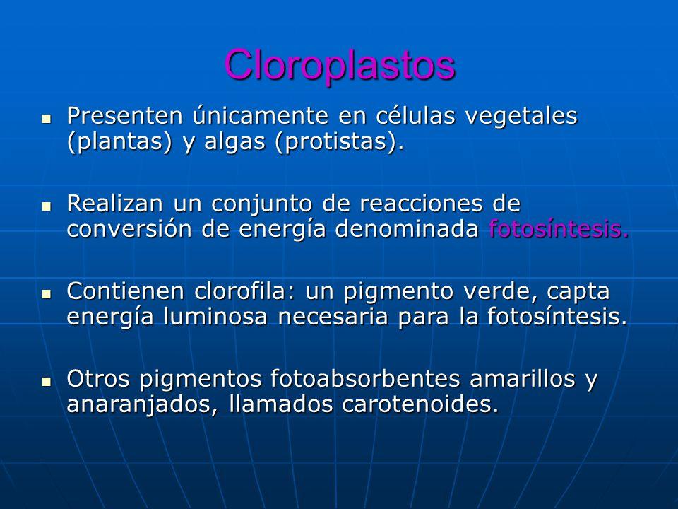 Cloroplastos Presenten únicamente en células vegetales (plantas) y algas (protistas).