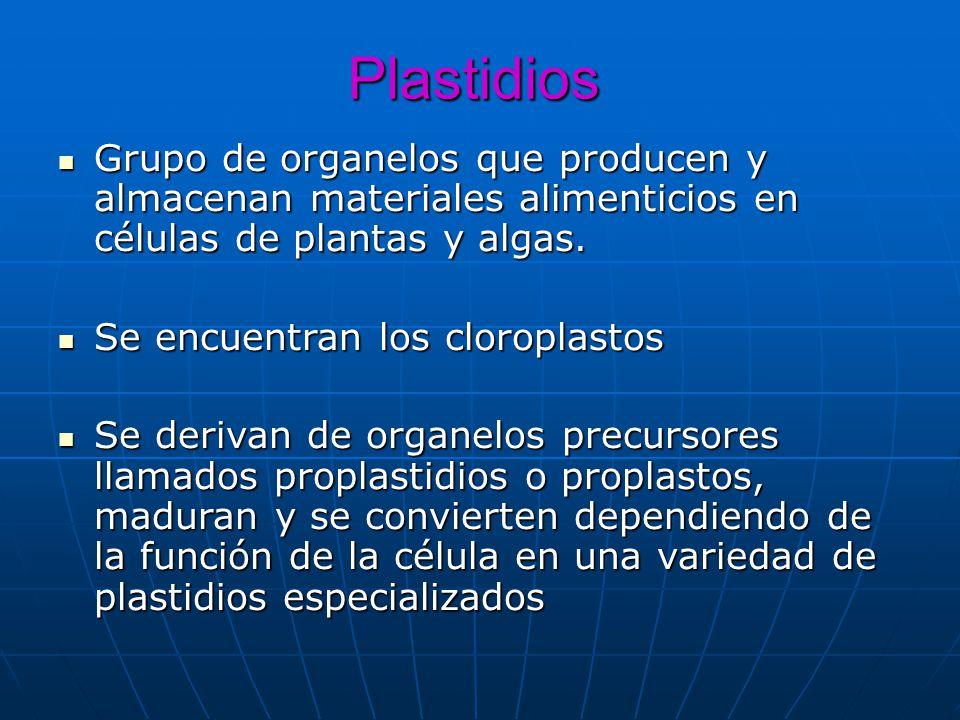 Plastidios Grupo de organelos que producen y almacenan materiales alimenticios en células de plantas y algas.