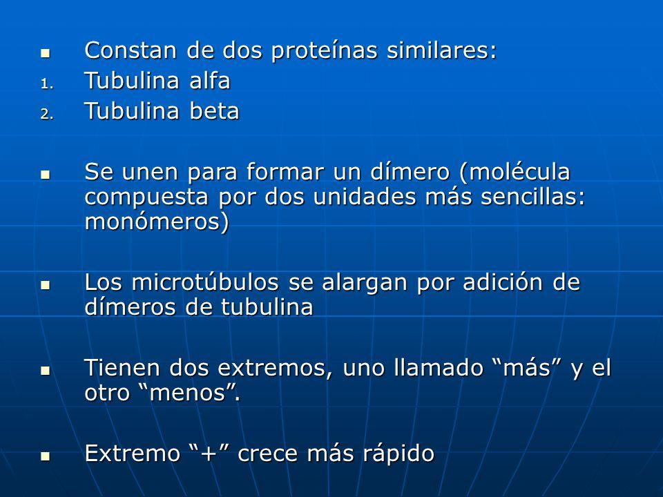 Constan de dos proteínas similares: