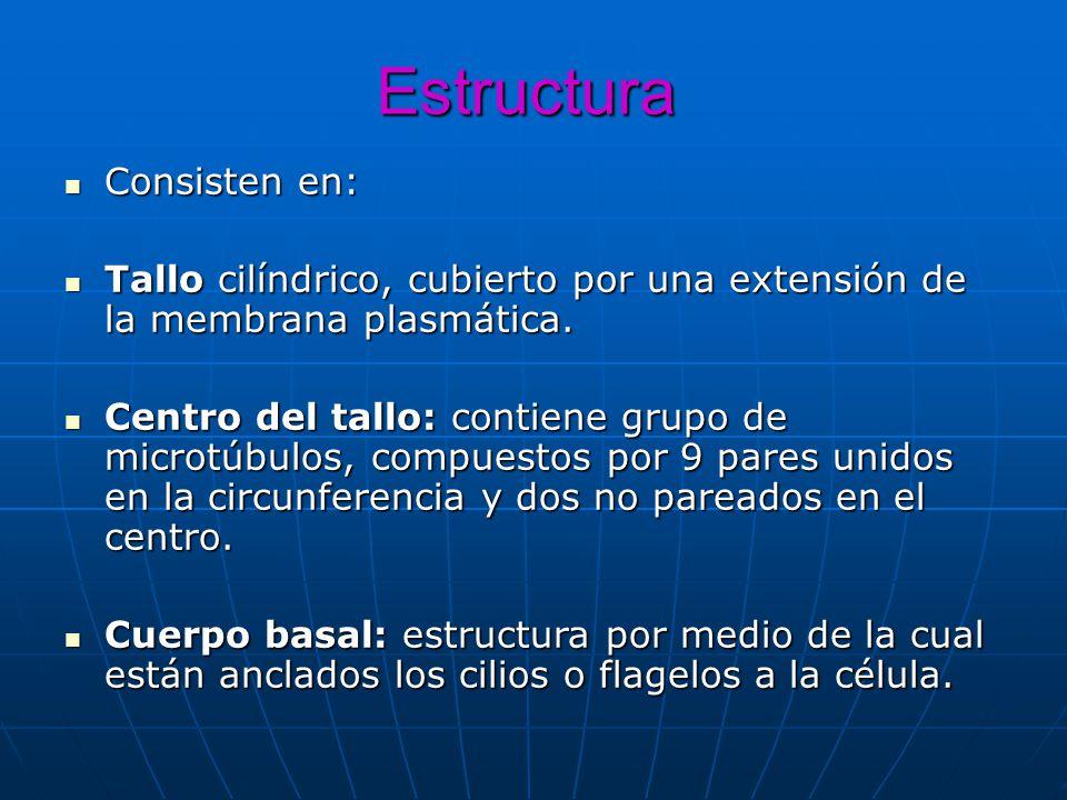 Estructura Consisten en: