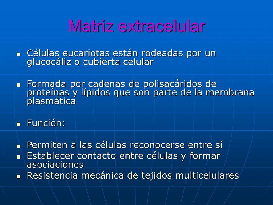 Matriz extracelular Células eucariotas están rodeadas por un glucocáliz o cubierta celular.