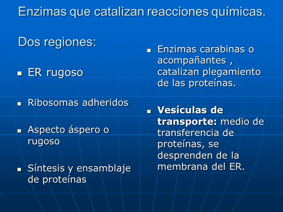 Enzimas que catalizan reacciones químicas. Dos regiones: