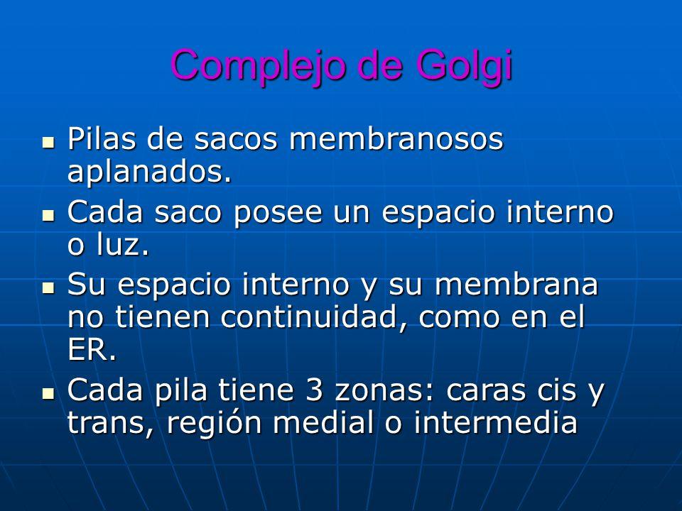 Complejo de Golgi Pilas de sacos membranosos aplanados.