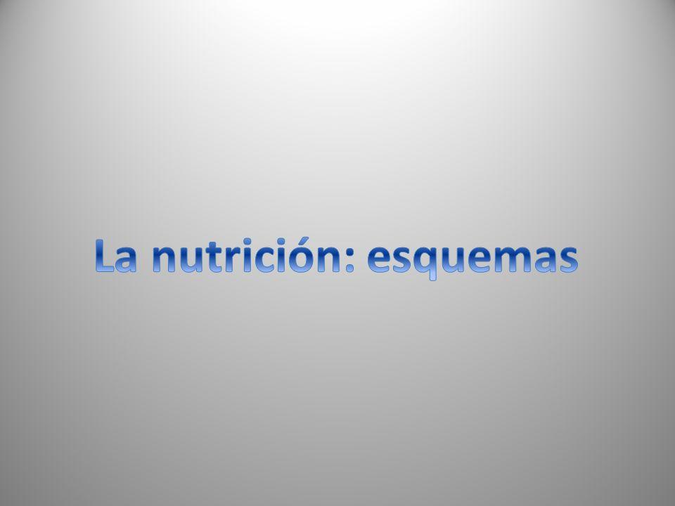 La nutrición: esquemas