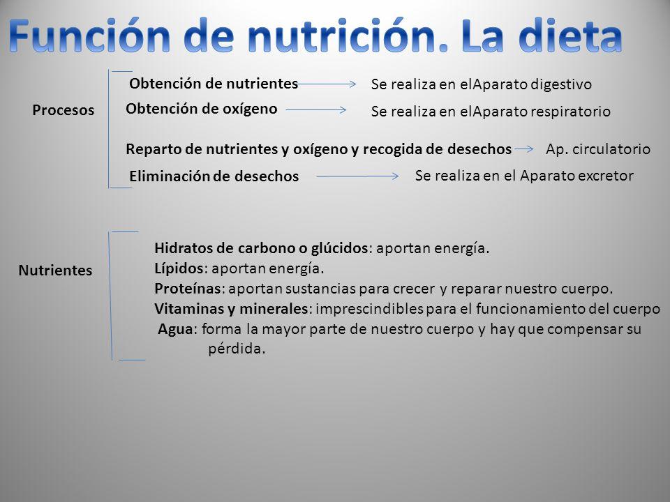 Función de nutrición. La dieta