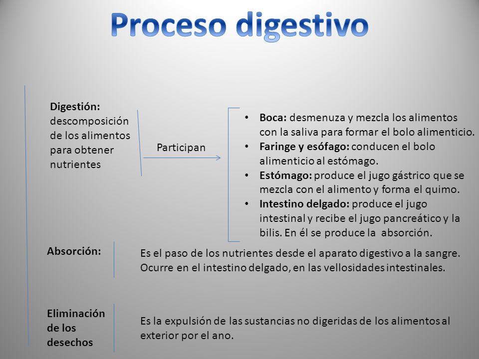 Proceso digestivo Digestión: descomposición de los alimentos para obtener nutrientes.