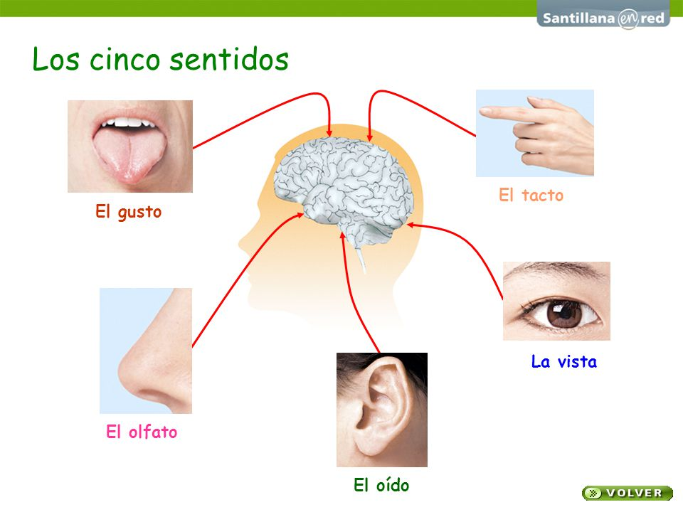 Los sentidos ojo cinco sentidos related keywords for El divan de los sentidos