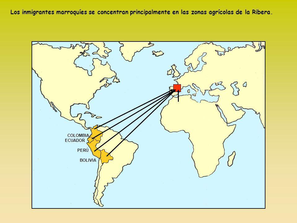 Los inmigrantes marroquíes se concentran principalmente en las zonas agrícolas de la Ribera.