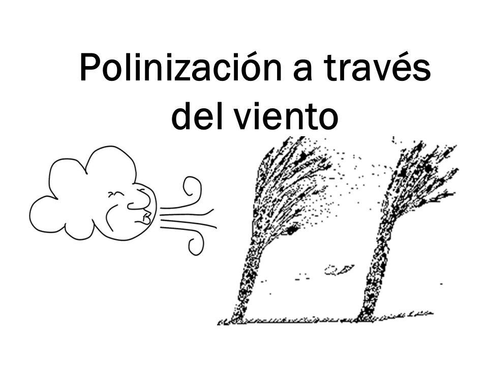 Polinización a través del viento