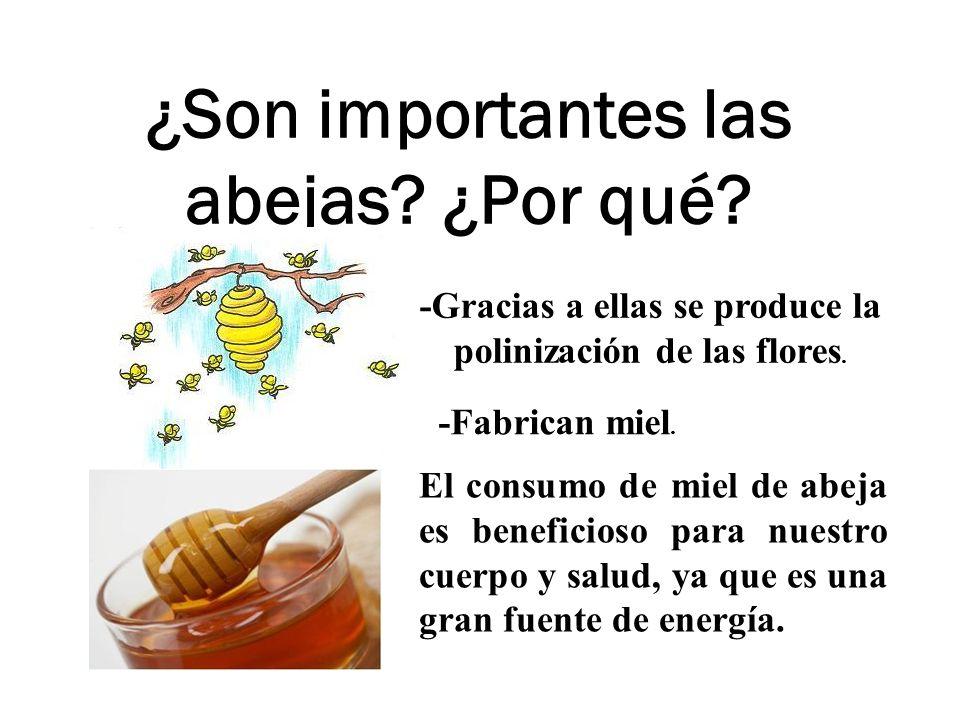 ¿Son importantes las abejas ¿Por qué