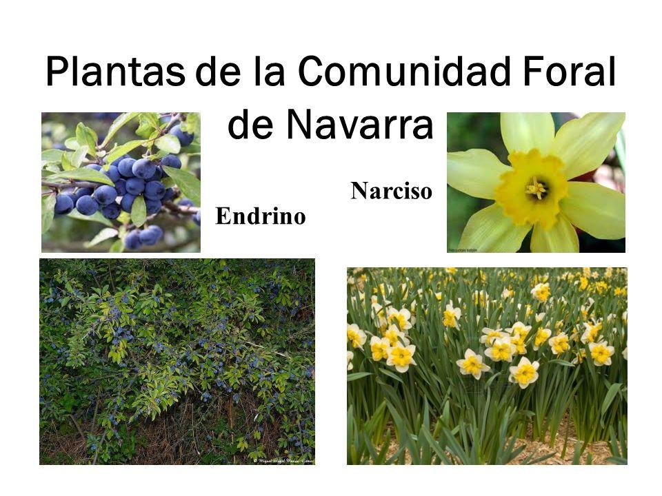 Plantas de la Comunidad Foral de Navarra