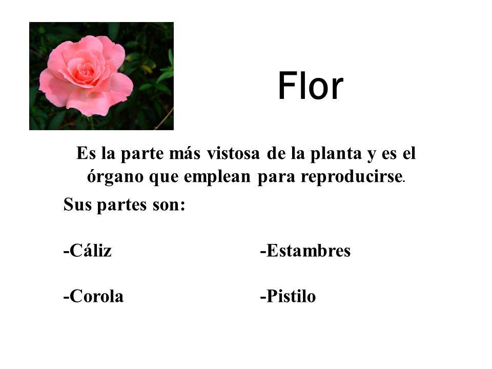 Flor Es la parte más vistosa de la planta y es el órgano que emplean para reproducirse. Sus partes son: