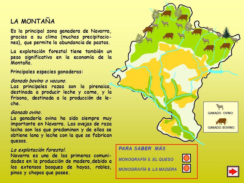 LA MONTAÑA Es la principal zona ganadera de Navarra, gracias a su clima (muchas precipitacio-nes), que permite la abundancia de pastos.