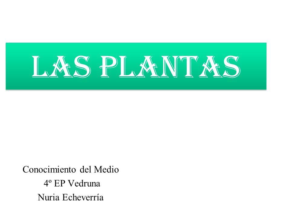 Conocimiento del Medio 4º EP Vedruna Nuria Echeverría