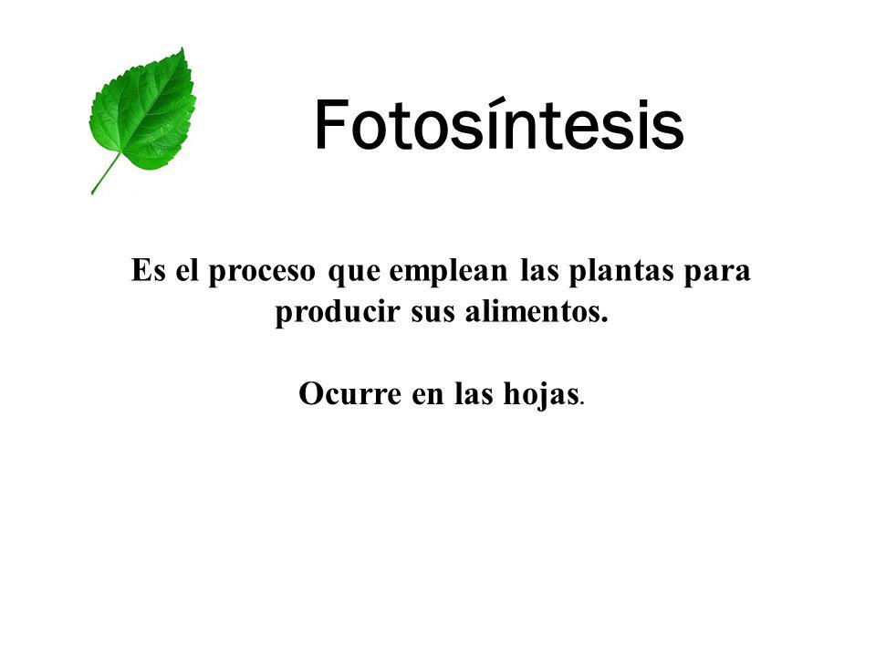 Es el proceso que emplean las plantas para producir sus alimentos.