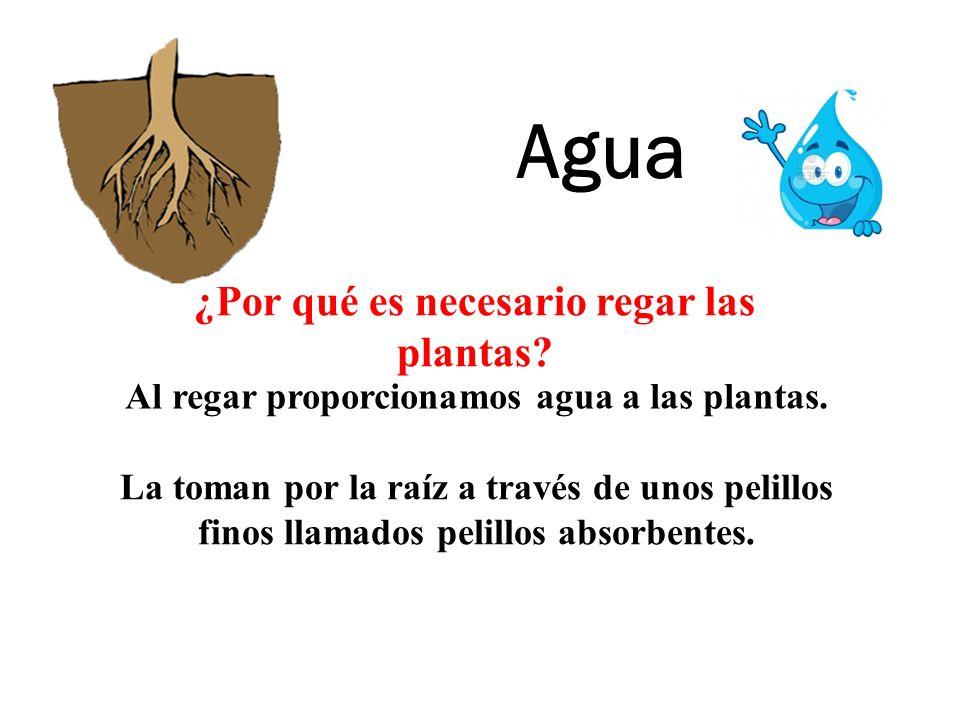 Agua ¿Por qué es necesario regar las plantas