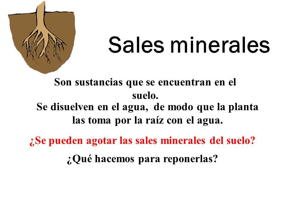 Sales minerales Son sustancias que se encuentran en el suelo.