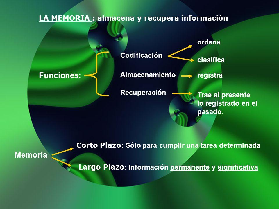 Funciones: Memoria LA MEMORIA : almacena y recupera información ordena