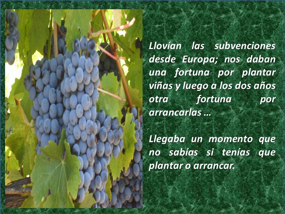 Llovían las subvenciones desde Europa; nos daban una fortuna por plantar viñas y luego a los dos años otra fortuna por arrancarlas …