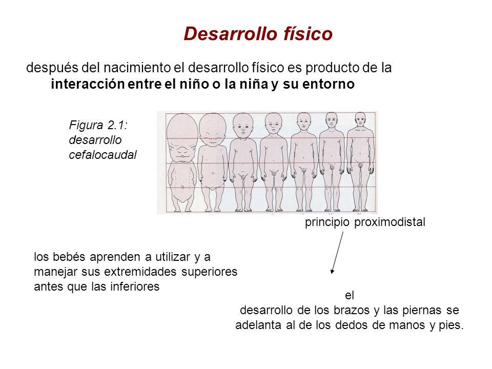 Desarrollo físico después del nacimiento el desarrollo físico es producto de la interacción entre el niño o la niña y su entorno.