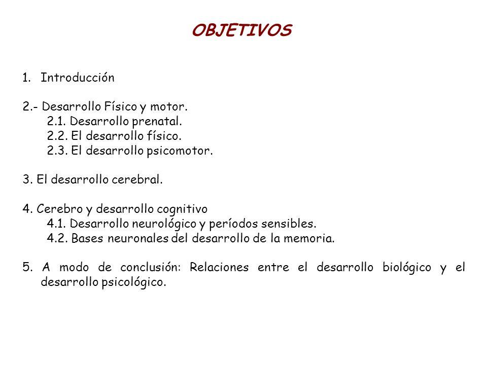 OBJETIVOS Introducción 2.- Desarrollo Físico y motor.