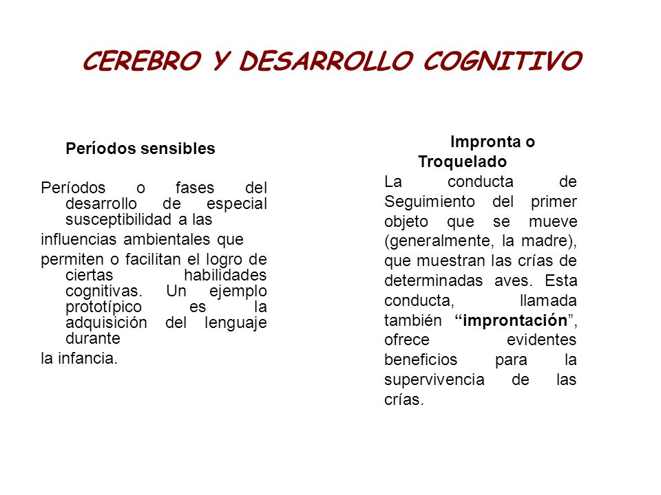 CEREBRO Y DESARROLLO COGNITIVO