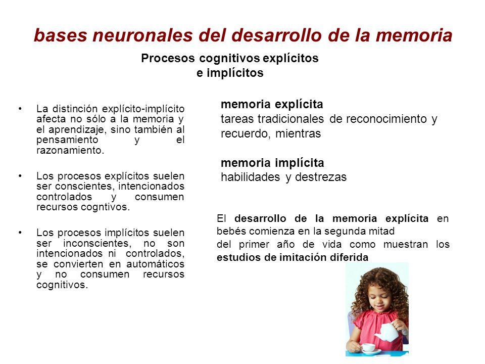 bases neuronales del desarrollo de la memoria