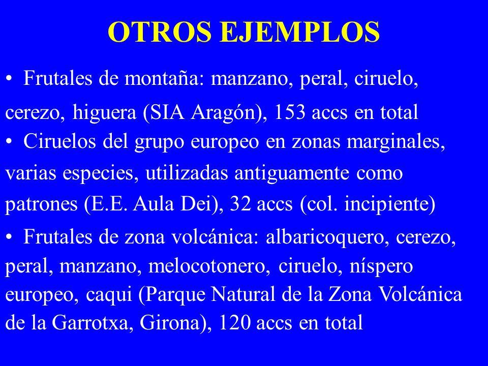OTROS EJEMPLOS Frutales de montaña: manzano, peral, ciruelo,
