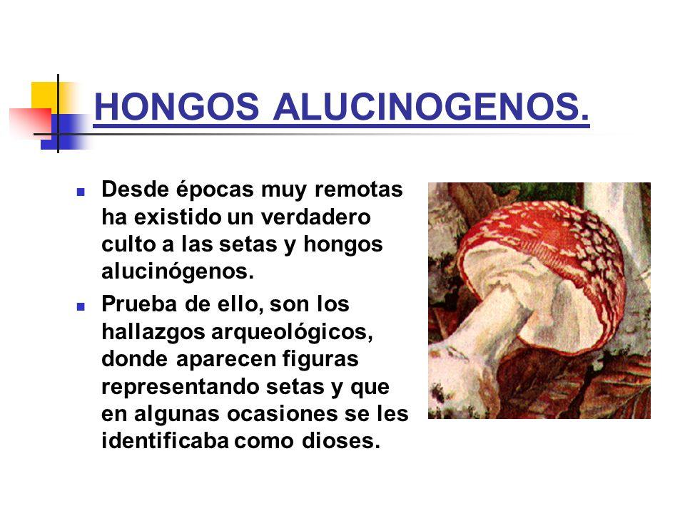 HONGOS ALUCINOGENOS. Desde épocas muy remotas ha existido un verdadero culto a las setas y hongos alucinógenos.